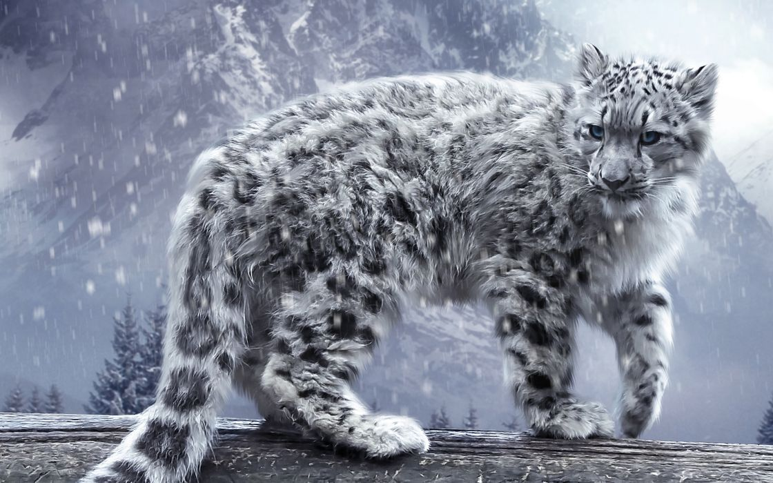 cats Snow leopards Animals wallpaper