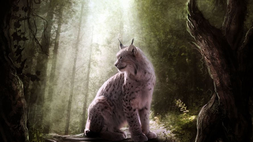 Lynx trees forest wallpaper