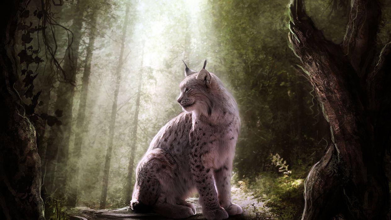 Lynx trees forest wallpaper