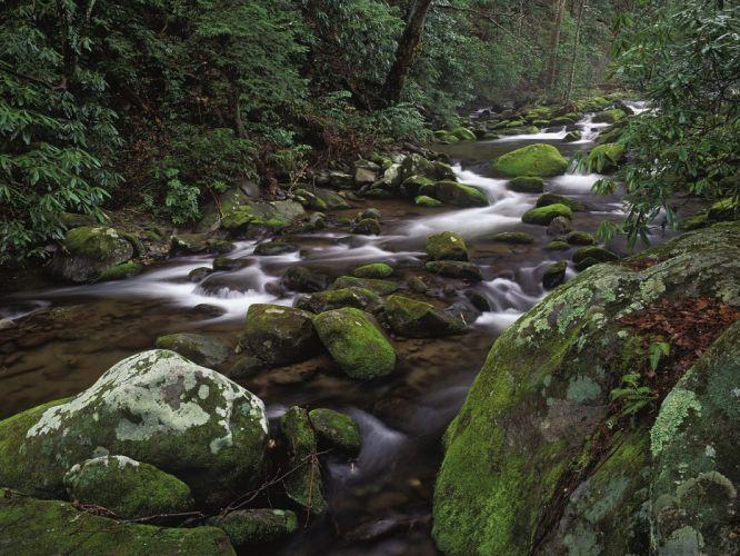 River Rocks Stones Moss Forest trees wallpaper