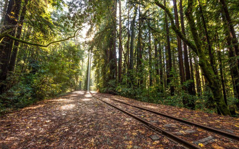 Railroad Rails Trees Forest tracks train wallpaper