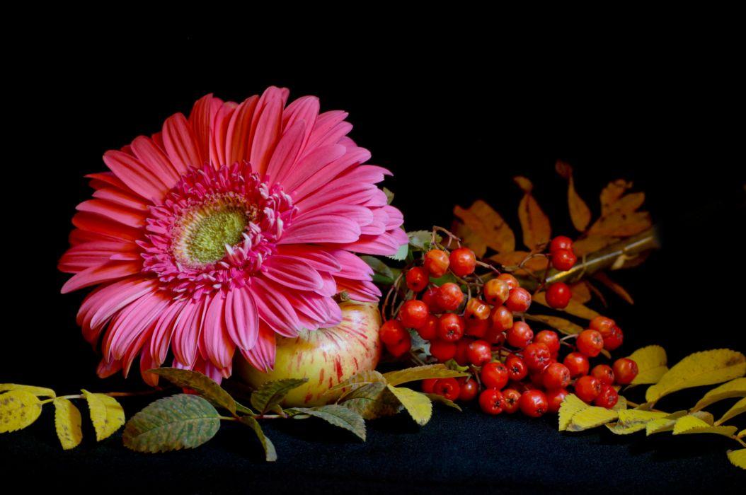 Still life Gerberas Flowers wallpaper