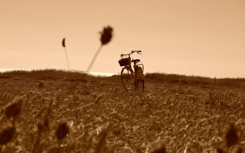 field bike mood bicycle landscapes sepia grass sky wallpaper