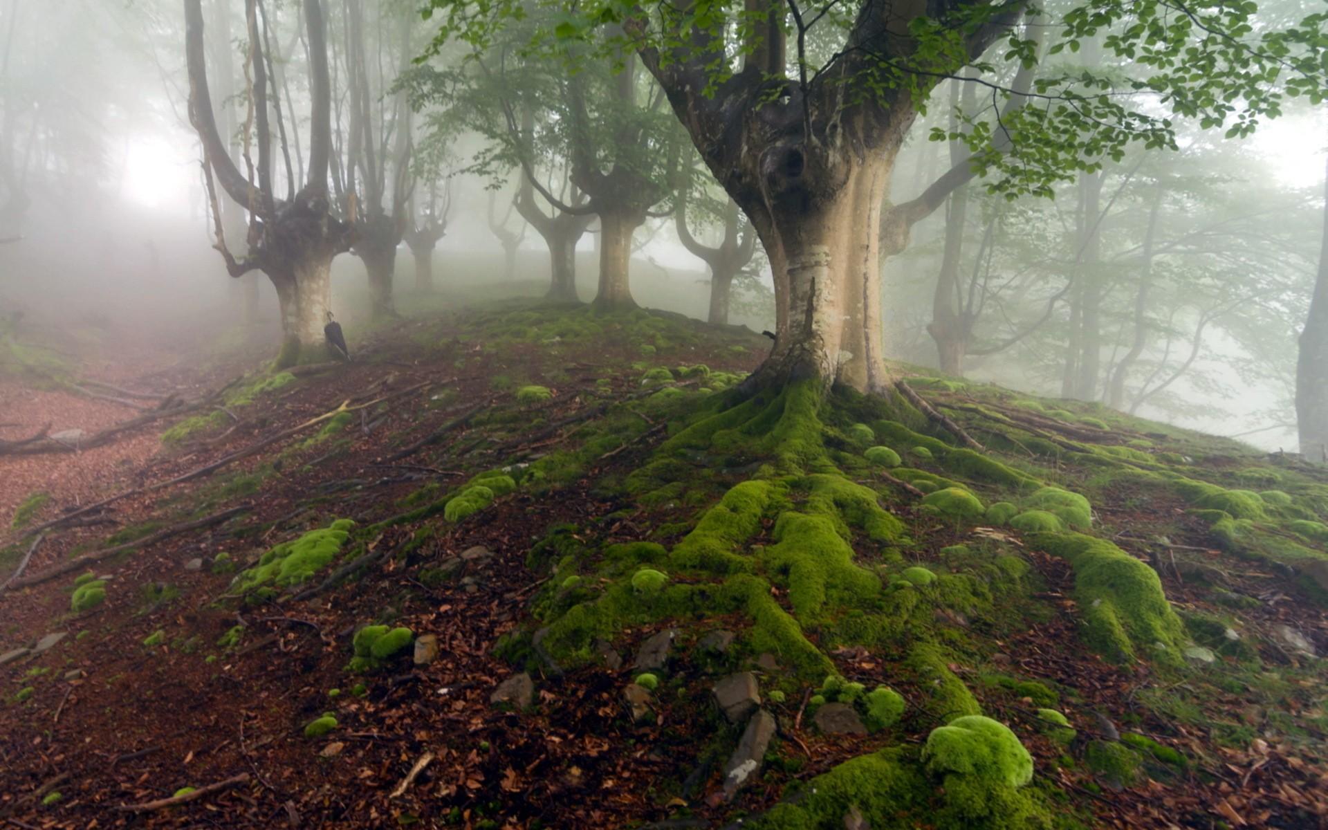 landscapes trees fog - photo #16