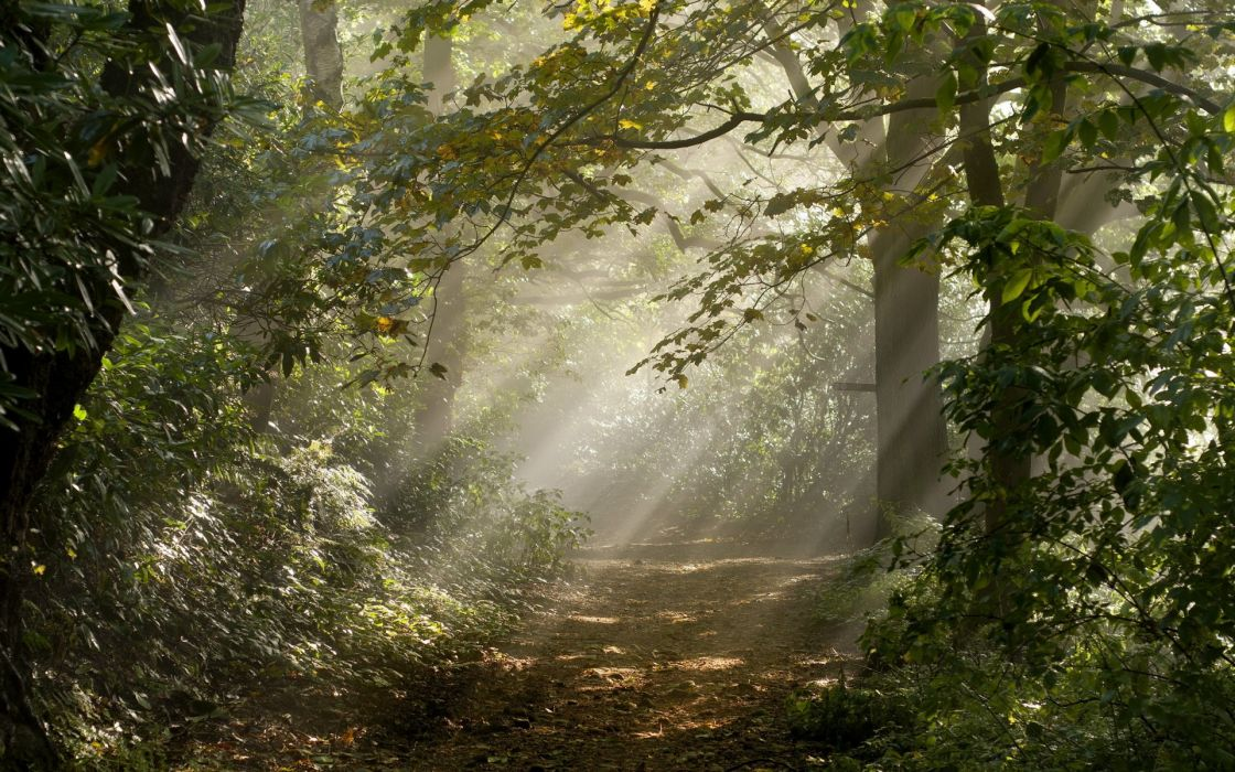 forest  road  light  nature rays leaves trees sunlight trail path landscapes wallpaper