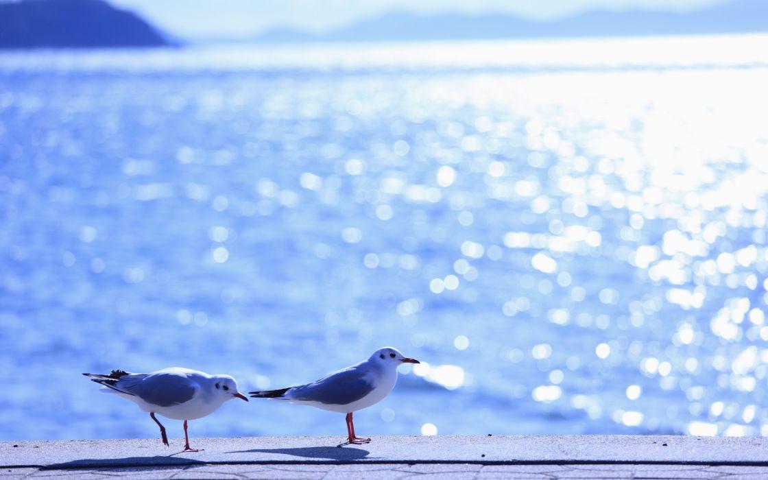 gulls birds sea waves reflections light sun summer shine ocean sea water wallpaper