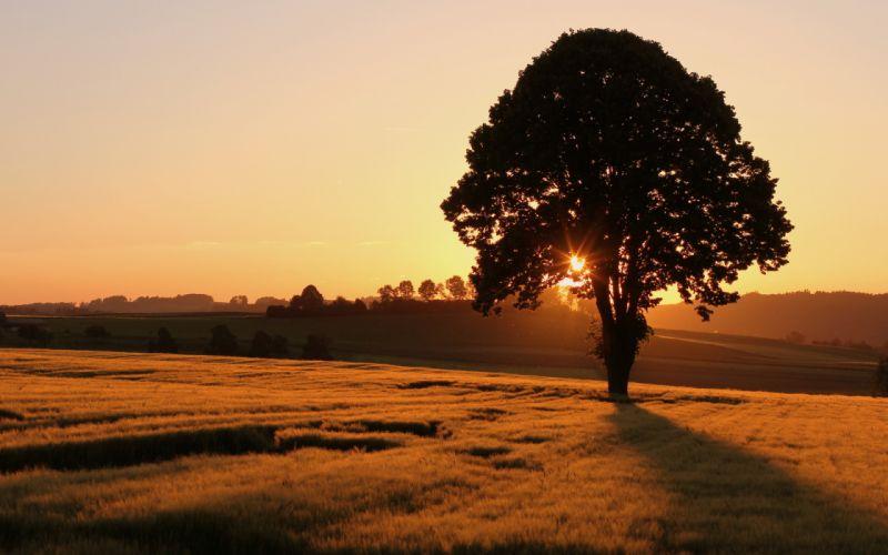 field tree sunset landscape sunrise wallpaper