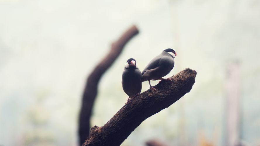 macro birds branches wallpaper