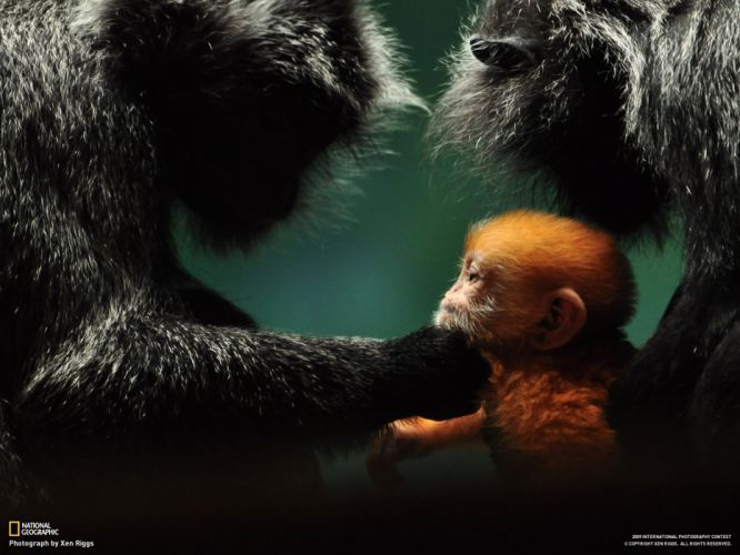 Monkey Baby mood cute babies love wallpaper