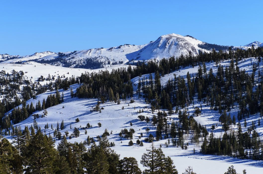 Mountains Scenery Nevada Snow Trees Nature forest sky winter wallpaper