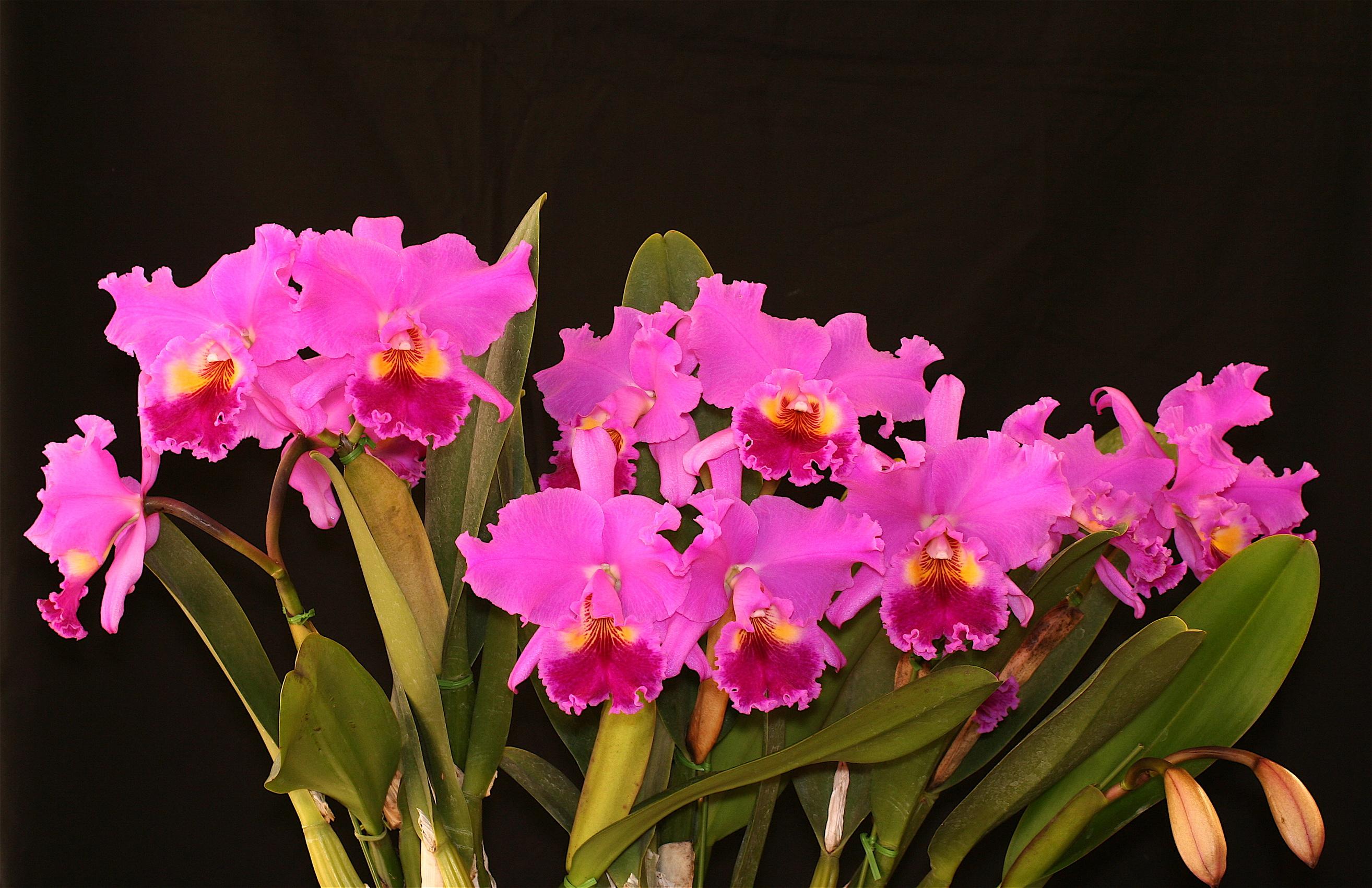 Black Orchid Flower Bouquet