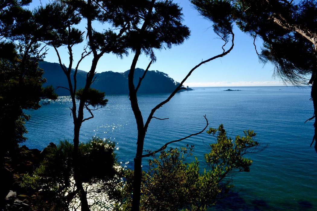 Parks Australia Coast Sea Scenery Abel Tasman Branches Nature ocean landscapes coast shore wallpaper