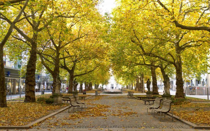 sidewalk park statue sidewalk bench trees leaves autumn fall cities people wallpaper