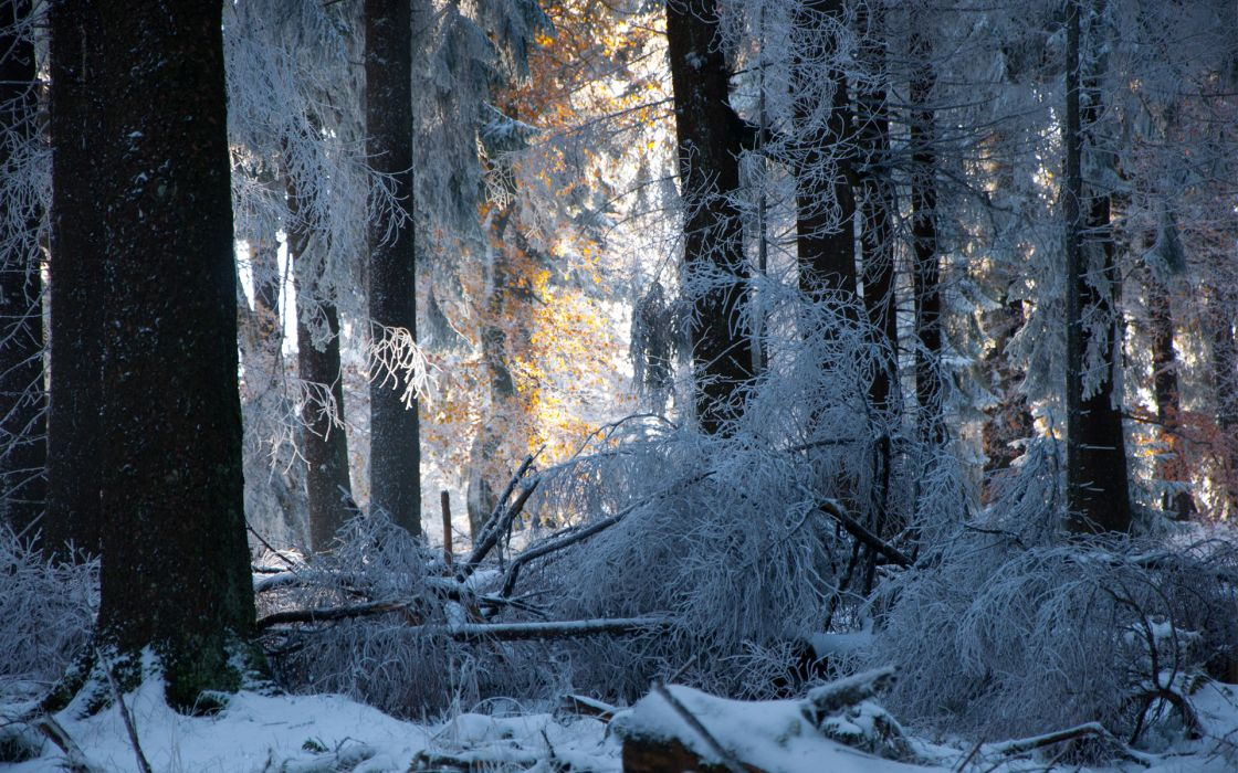 snow  forest  trees  winter sunlight light frost landscapes wallpaper