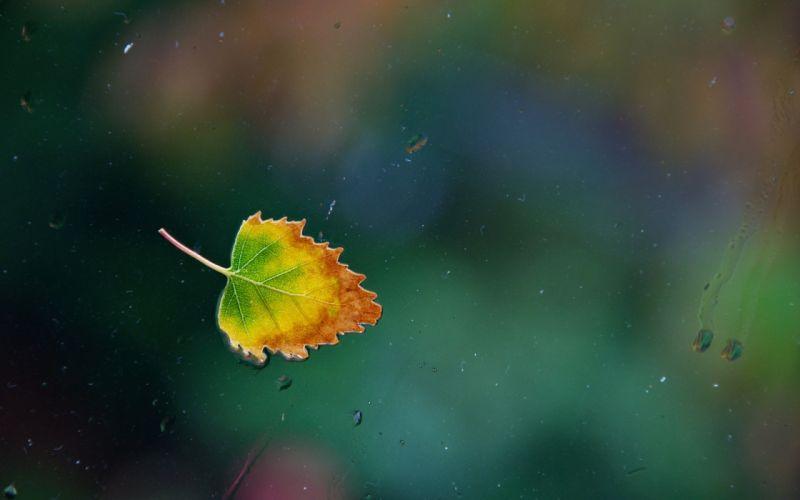 water drops Leaf glass autumn window wallpaper