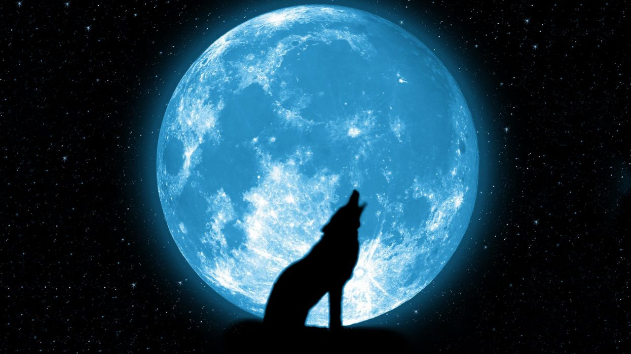 wolf howling stars beautiful silhouette space sky wallpaper