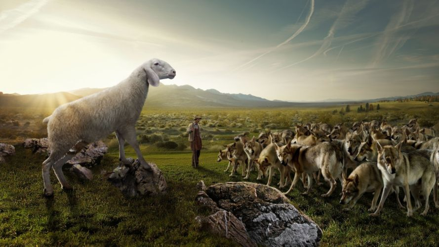 Wolves flock sheep shepherd nature field sky rocks situation humor wolf people men males landscapes sky mountains wallpaper