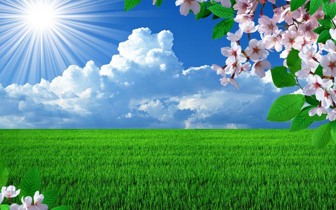 spring field branch blossom cherry sun grass sky clouds seasons wallpaper