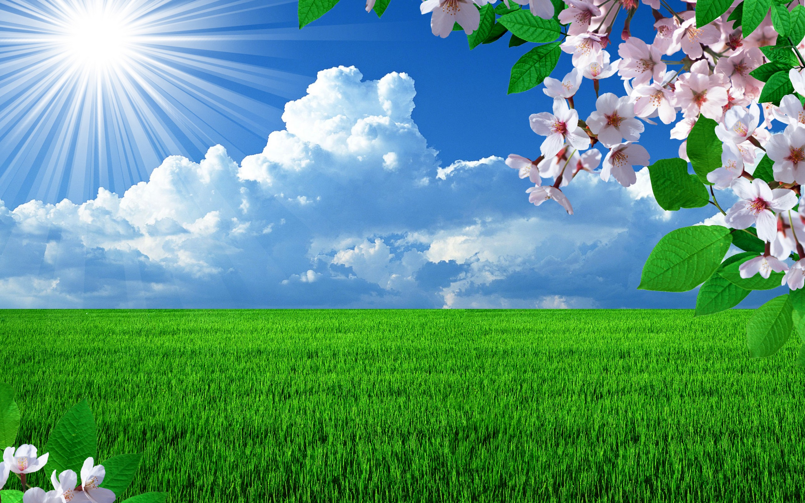 Sky Sun Sun Grass Sky Clouds