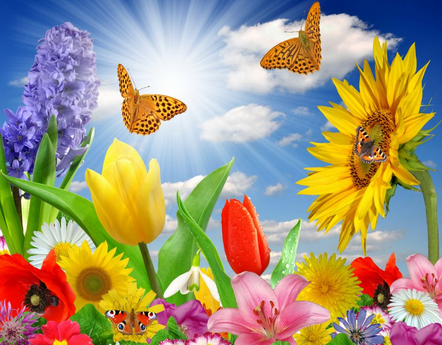 summer spring butterfly flowers sunlight rays color wallpaper