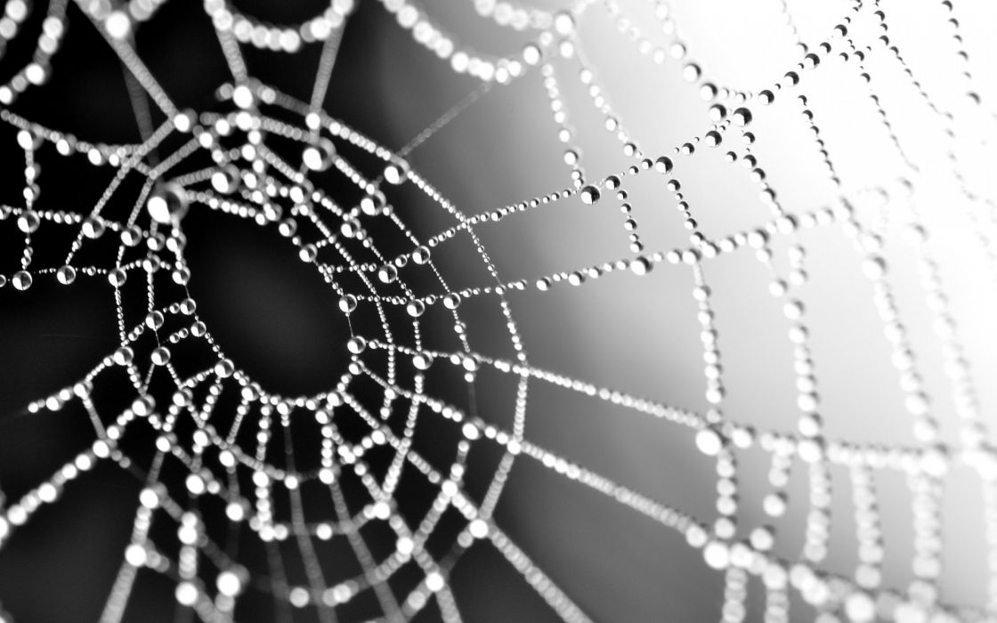 macro spiderweb webs water drops reflection dew spiders insects wallpaper