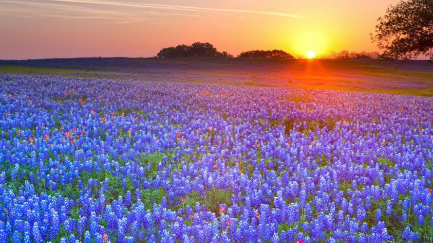 meadow flowers sunset lupine hdr fields sky color wallpaper