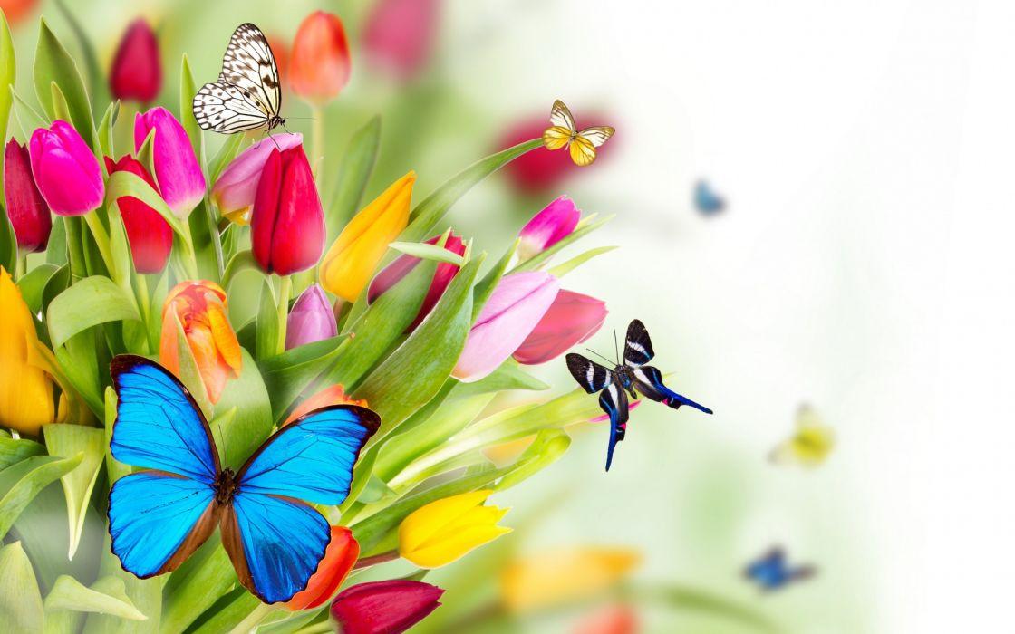 spring flowers tulips butterflies bokeh art summer wallpaper