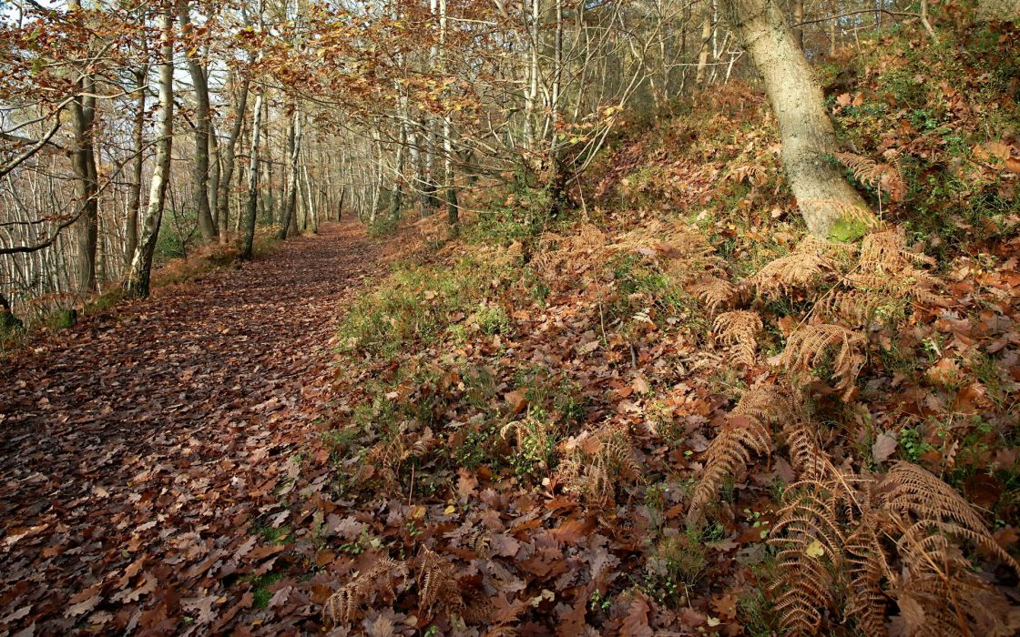road  forest  nature  leaves trees autumn fall pathway trail wallpaper