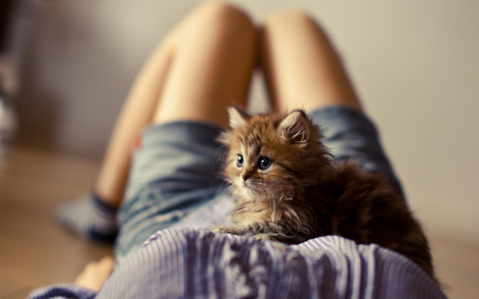 Котенок на плече  № 1126874 загрузить