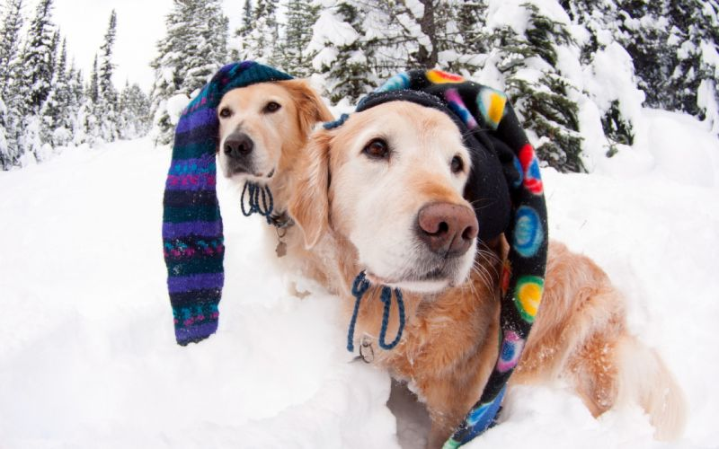 humor dogs canines funny winter snow face eyes wallpaper