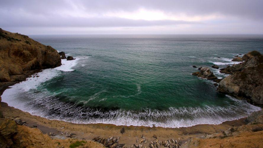 animals seals shore coast beaches waves sea ocean sky clouds wallpaper