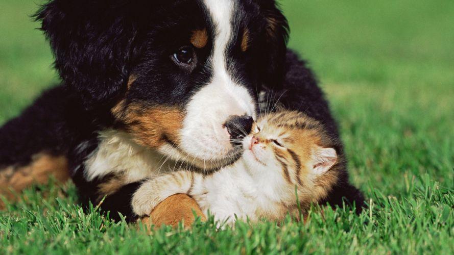 Cats Dogs Kittens Grass Animals puppy cute love wallpaper