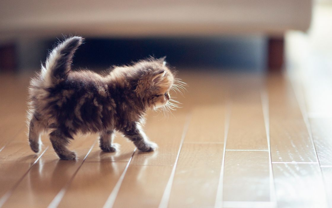cats kitten babies wallpaper