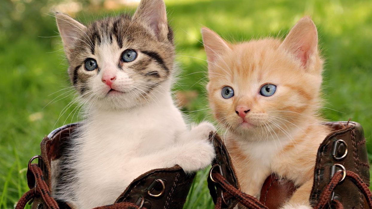 cats kittens babies face eyes cute wallpaper