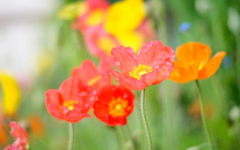 macro flowers petals color wallpaper