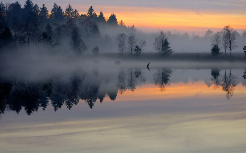 morning pond forest mist smooth surface lake sunrise trees fog sky shore reflection wallpaper