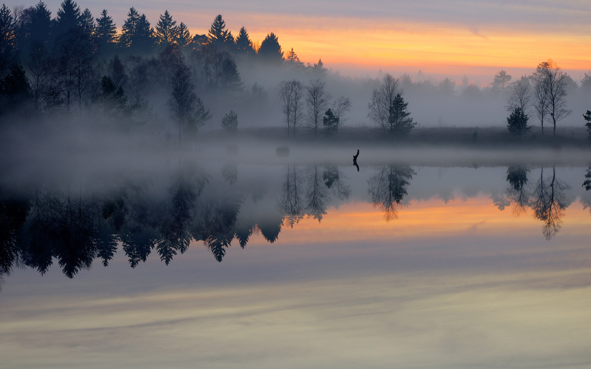 Morning pond forest mist smooth surface lake sunrise trees fog sky