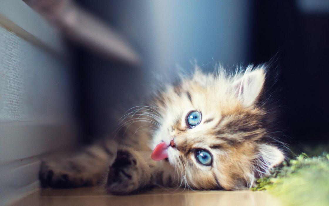 sunlight cats kittens babies face eyes cute wallpaper