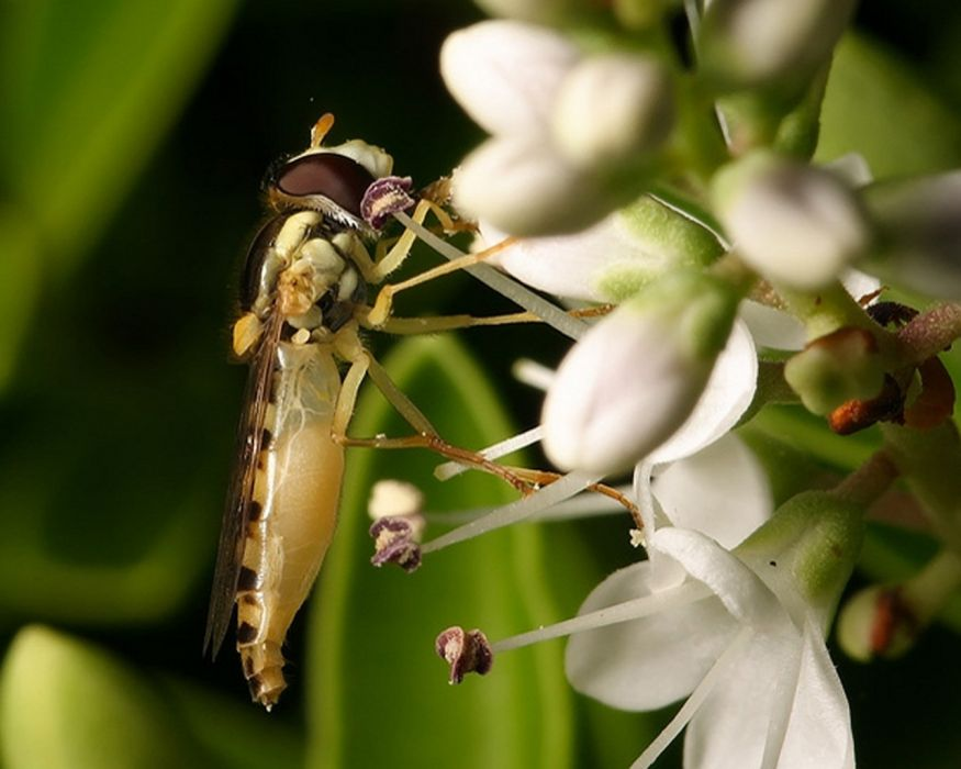 insects fly wallpaper