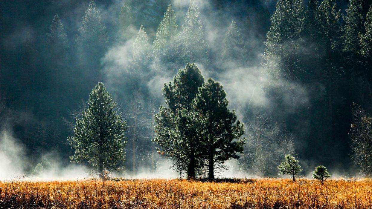 landscapes nature trees fields fog land Foggy wallpaper