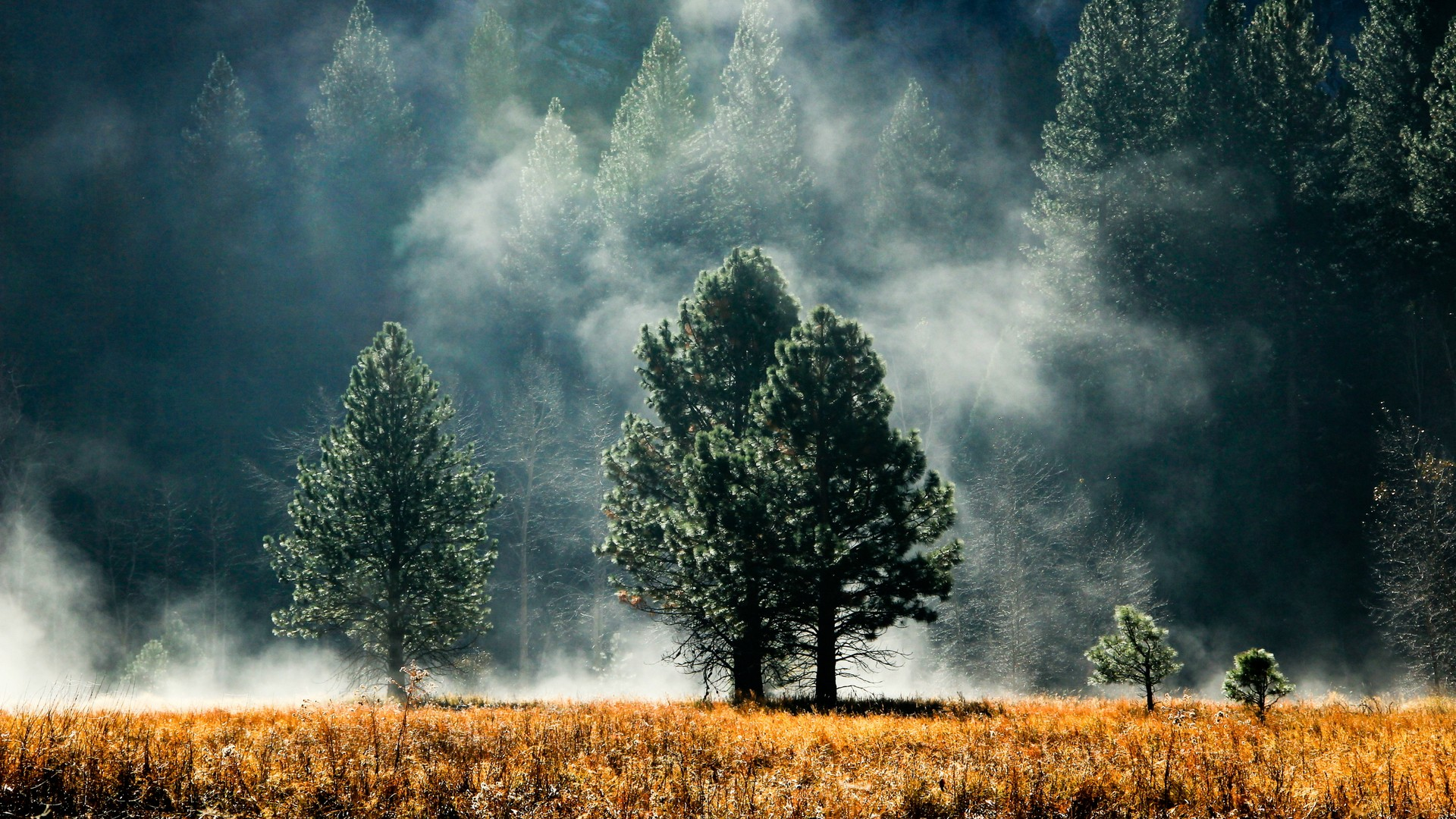 landscapes trees fog -#main