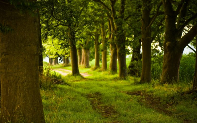 nature trees forest parks wallpaper