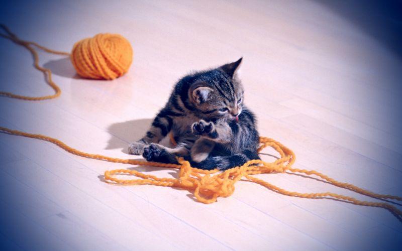 cats kittens yarn wallpaper