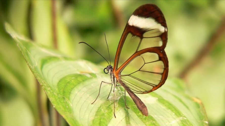 animals insects butterflies wallpaper