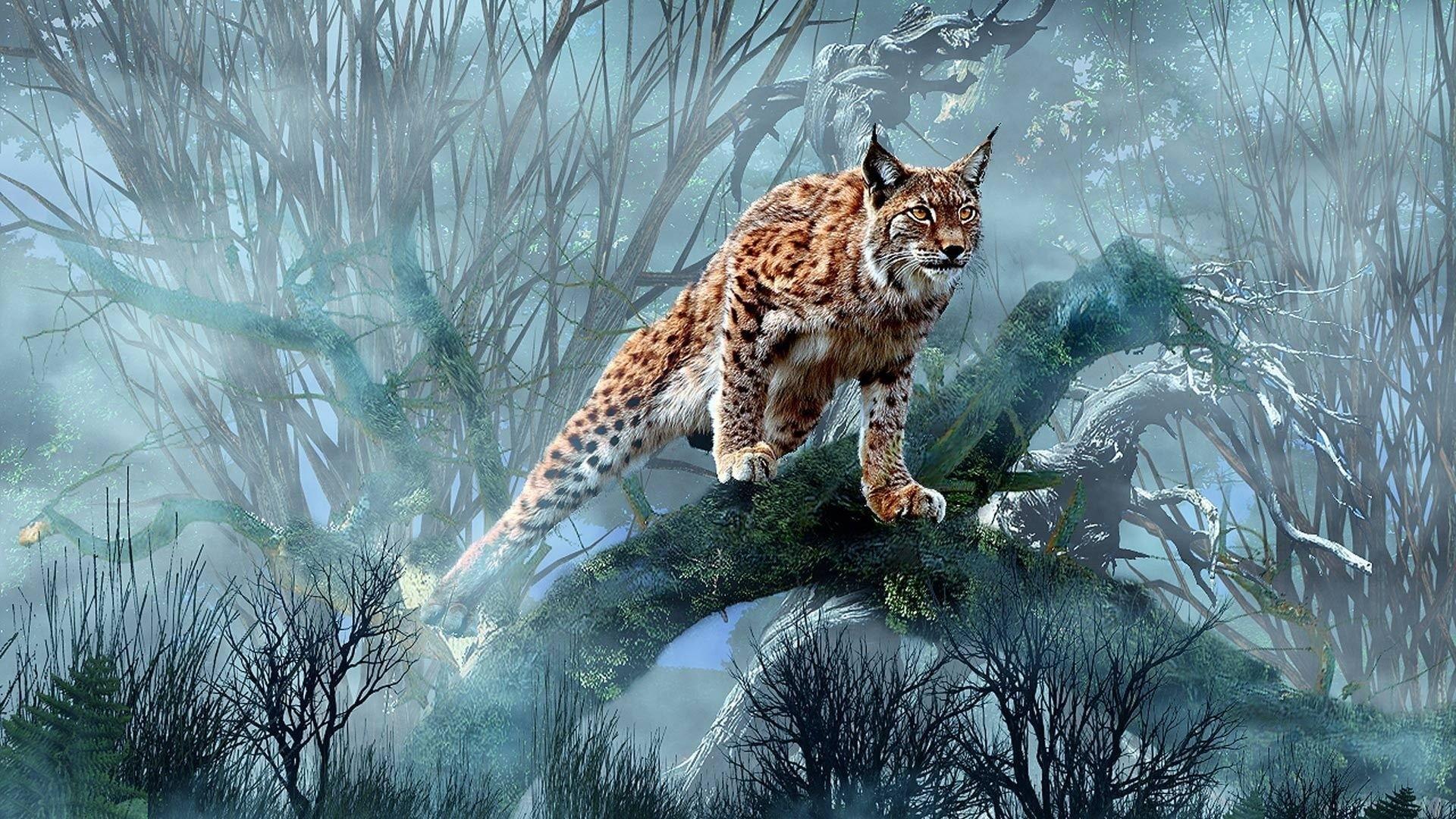 природа животные ветка деревья рысь nature animals branch trees lynx  № 559993 без смс