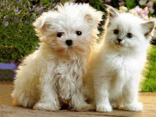 puppies kittens wallpaper