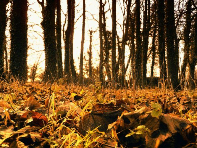 nature autumn (season) forest seasons wallpaper