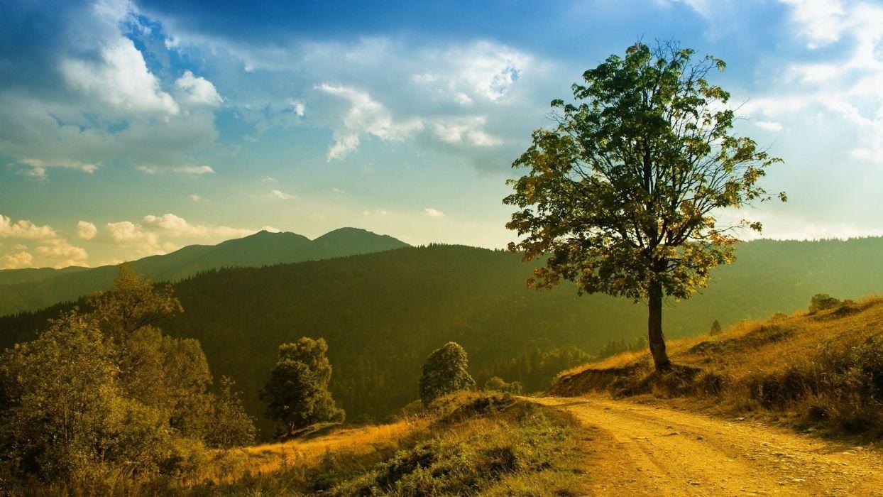 landscapes nature trees roads wallpaper