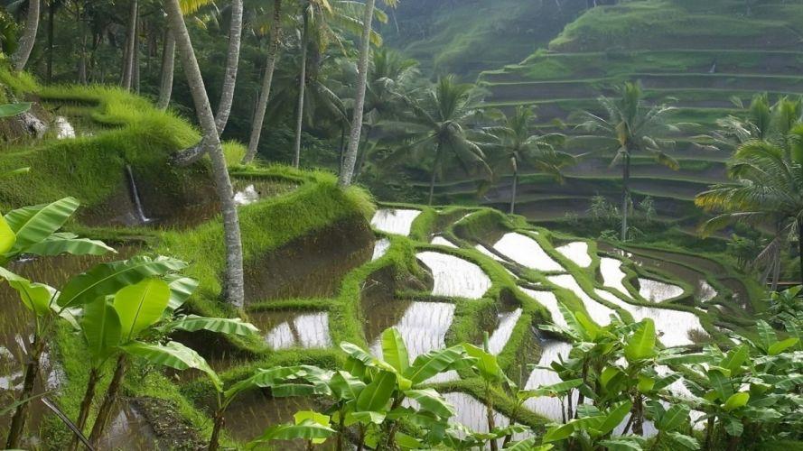 landscapes jungle wallpaper