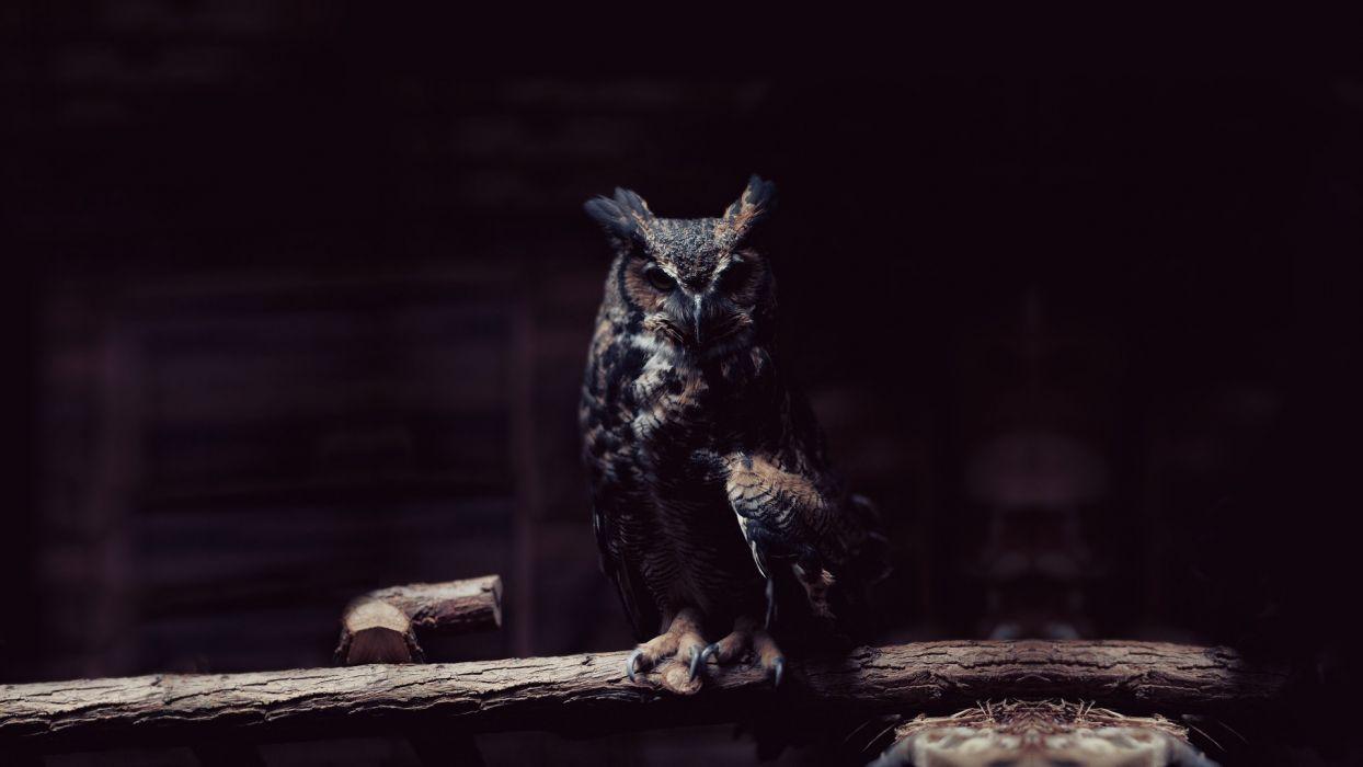 dark animals focus owls wallpaper